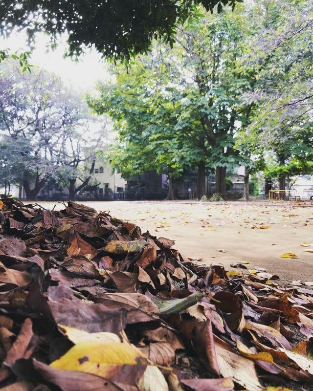 冬に向かって木々も準備中です(^^) #saitama #shiraoka #shiraokasougouengei #tree #fallenleaves #leaf #contrast #beautiful #view #seasons #埼玉 #白岡市 #白岡総合園芸 #木々 #木 #落ち葉 #葉っぱ #コントラスト #美しい #景色 #季節