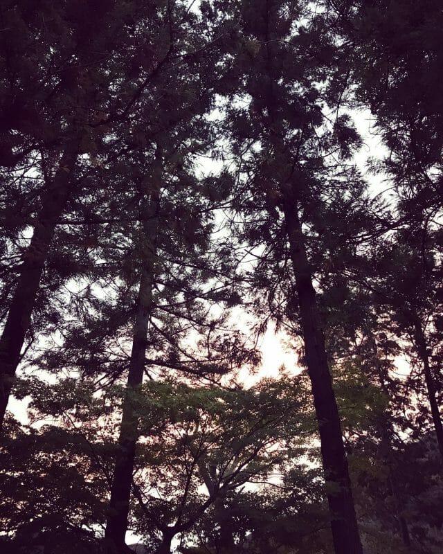 本日は日差しがあるのに寒かったです。 もう上着は2枚から3枚は必須ですね♪ #shiraoka #shiraokasougouengei #contrast #tree #green #saitama #埼玉 #白岡 #白岡市 #白岡総合園芸 #コントラスト #樹木 #緑