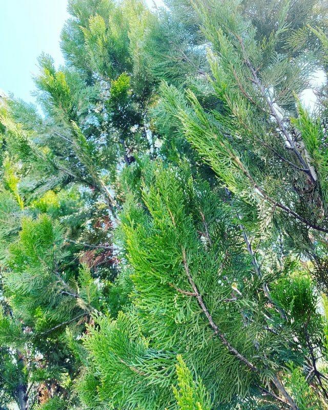 消毒の季節が今年もやってきました。 ご相談受け付けます。 是非白岡総合園芸へ(^^) #埼玉 #白岡市 #白岡総合園芸 #緑 #大切 #植木 #消毒 #saitama #shiraoka #shiraokasougouengei #green #important #gardenplants #disinfecting